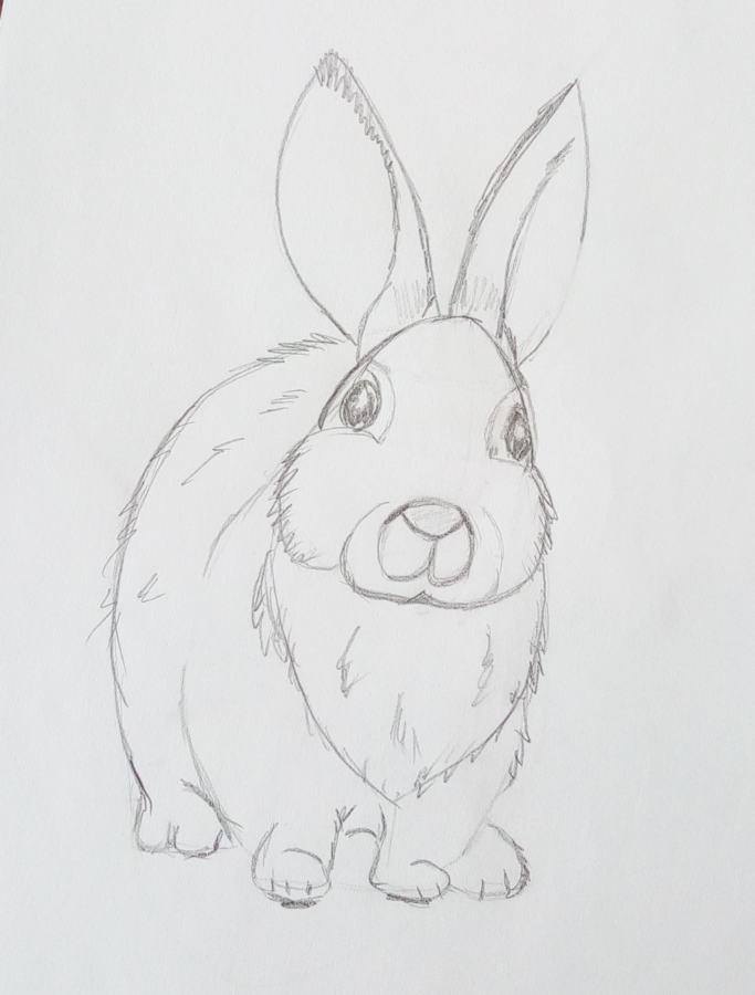 Рисунки карандашом зайца поэтапно
