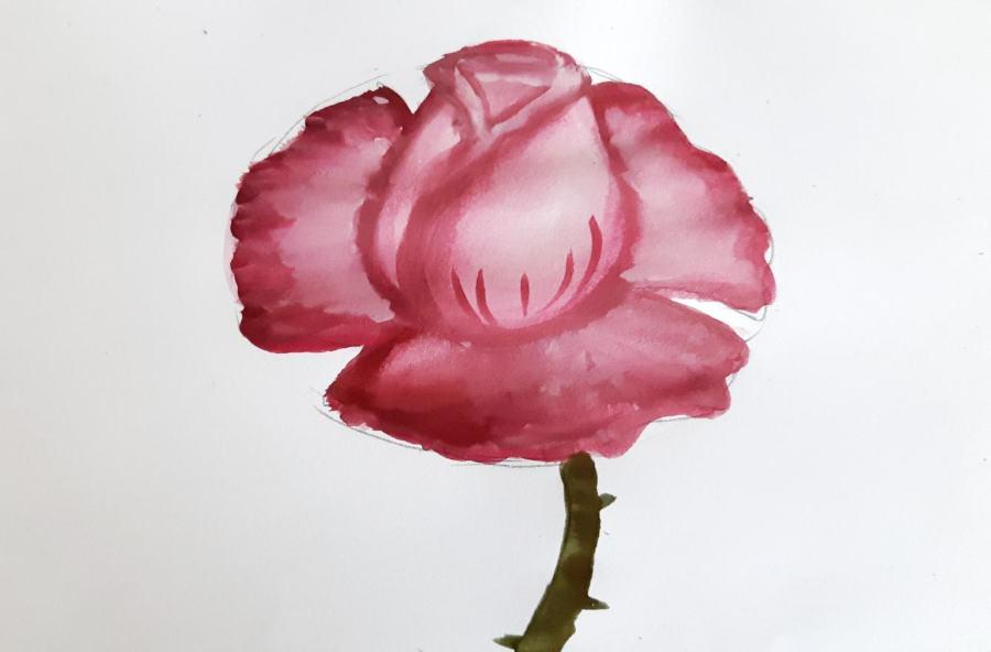 Как нарисовать розу поэтапно красками