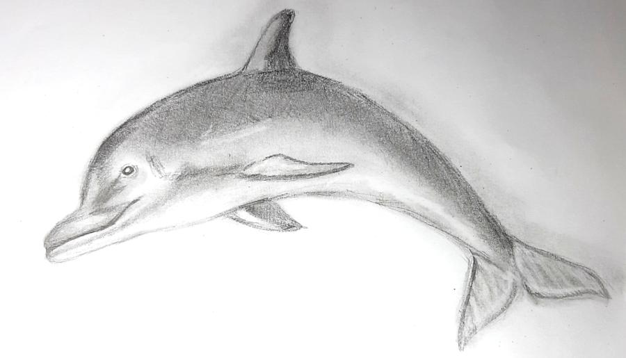 Как нарисовать дельфина карандашом поэтапно