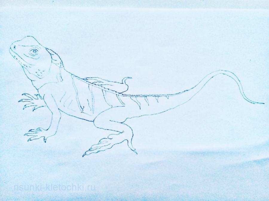Как нарисовать ящерицу поэтапно карандашом