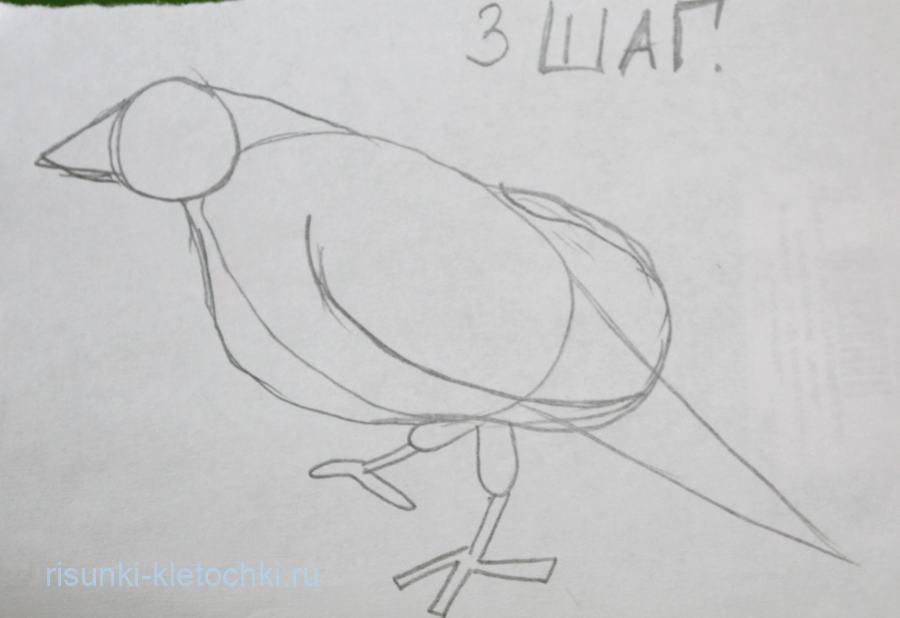 Как нарисовать ворона поэтапно Карандашом