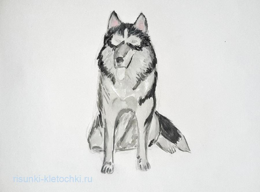 Как нарисовать Хаски потапно
