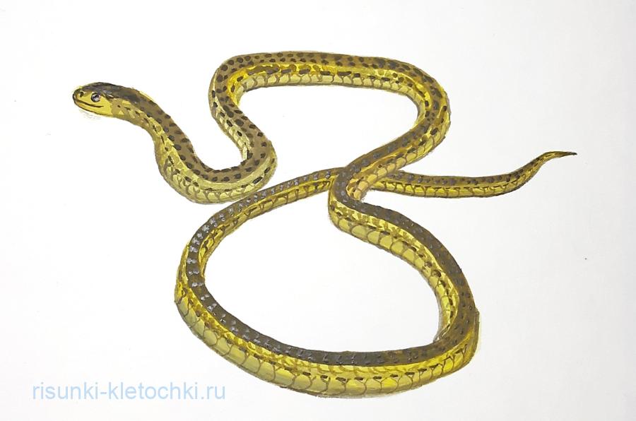 Как нарисовать Змей поэтапно карандашом