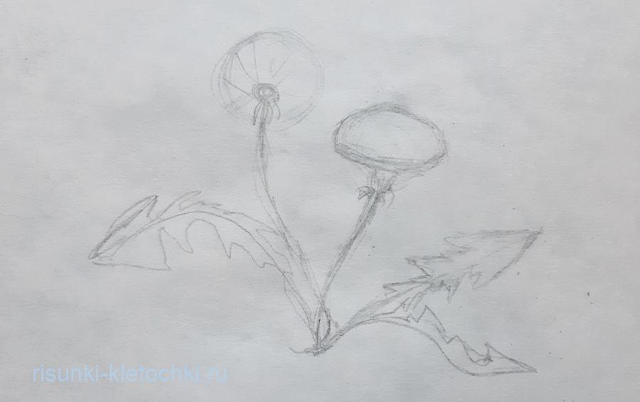 Как нарисовать одуванчик поэтапно карандашом