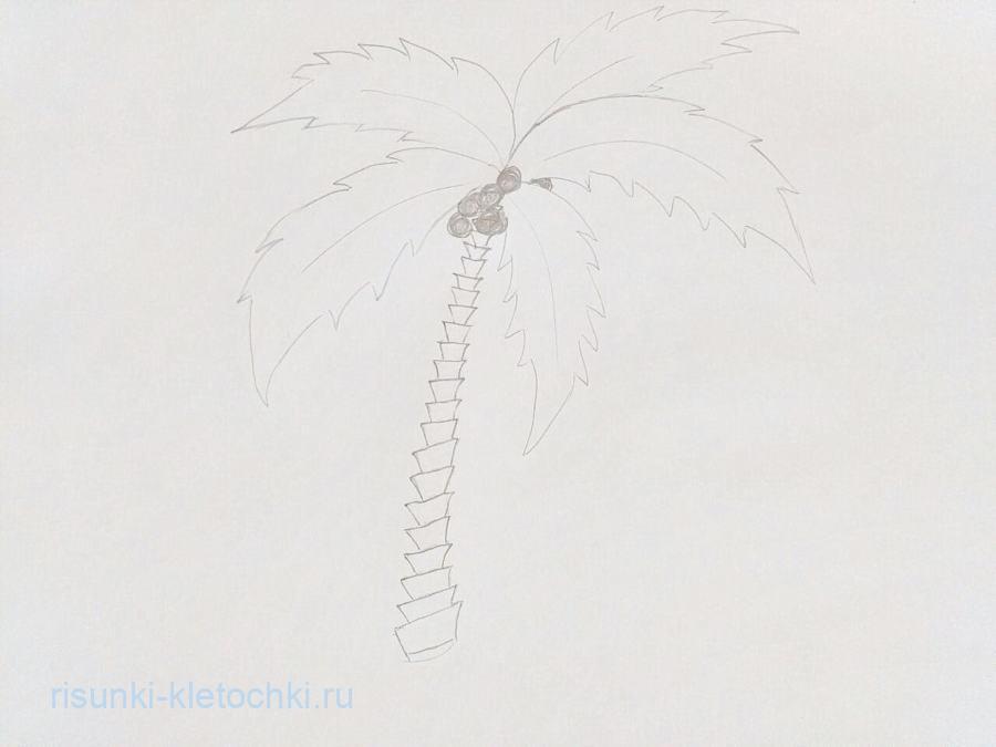 Как нарисовать пальму поэтапно карандашом