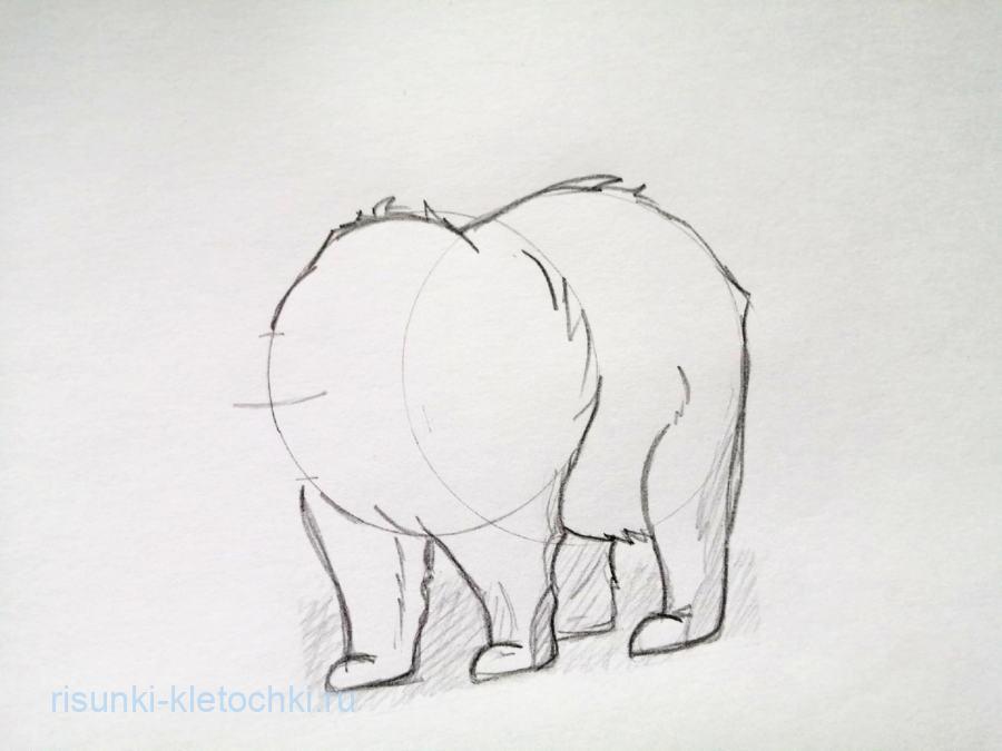 Как нарисовать медведя карандашом поэтапно