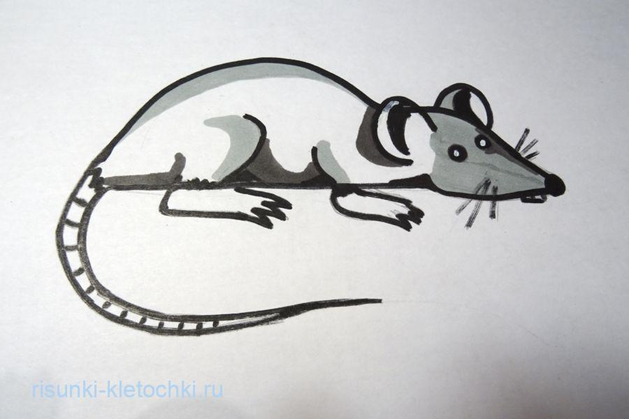 Как нарисовать крысу  поэтапно
