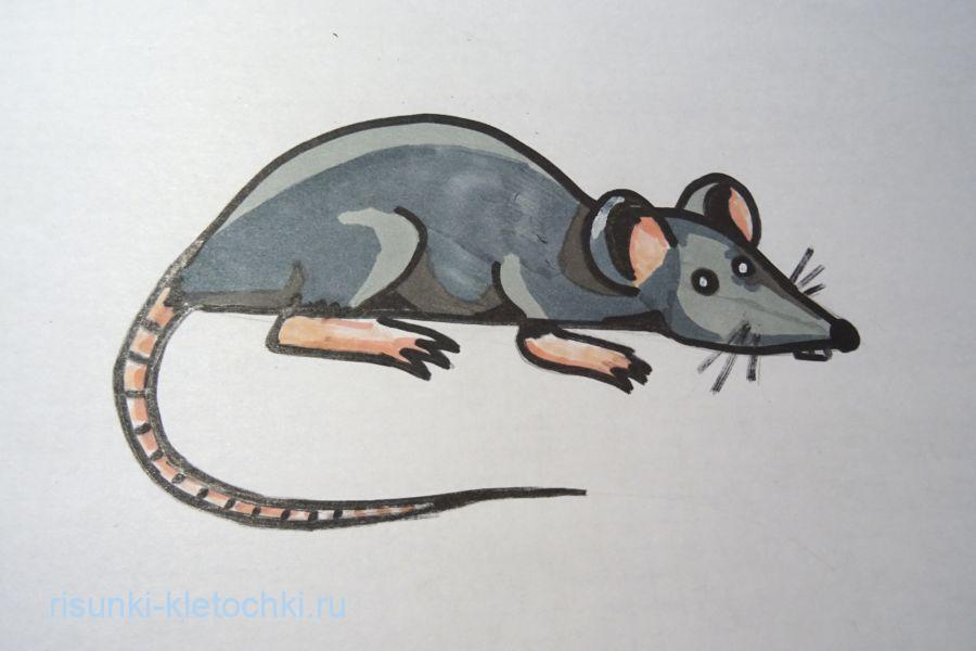 Как нарисовать крысу  поэтапно   - 2020 год.