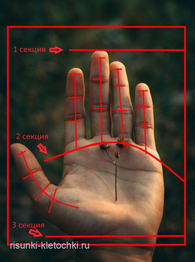 Как нарисовать руку поэтапно карандашом